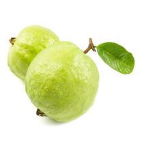ฝรั่งกิมจู Kimchoo Guava 1 กก.