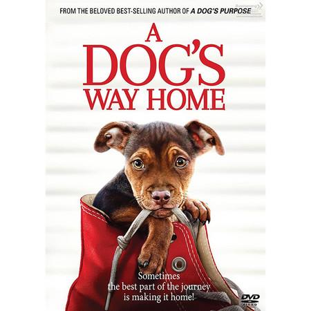 DVD A Dog's Way Home เพื่อนรักผจญภัยสี่ร้อยไมล์ (SE)