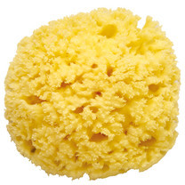 100% Mediterranean Natural Sea Sponge Size XL (16 cm)