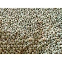 เมล็ดถั่วลันเตาสำหรับเพาะงอกเป็นต้นอ่อนโตเหมี่ยว พันธุ์สีเขียว นิวซีแลนด์ เมล็ดใหม่ เปอร์เซ็นการงอกสูง