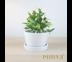 Piniya เขลางค์ กระถางต้นไม้พร้อมจานรอง, เซรามิก สโตนแวร์, 14ซม., สีขาว เคลือบมัน
